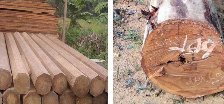 Log kayu ulin