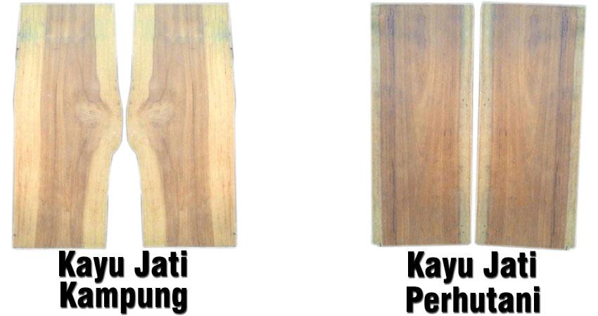 kayu jati perhutani dan kayu jati kampung