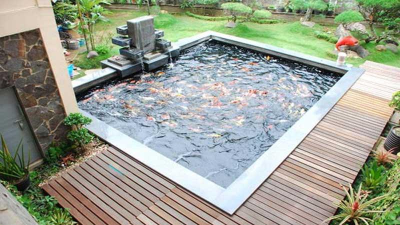 bangun kolam ikan minimalis di dekat taman depan rumah